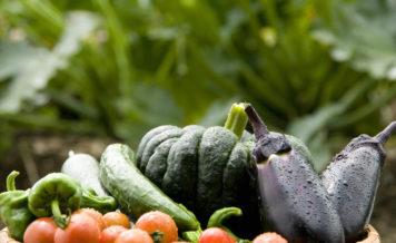 夏野菜を使ったおいしい夏レシピ!親子で挑戦できる簡単メニューも